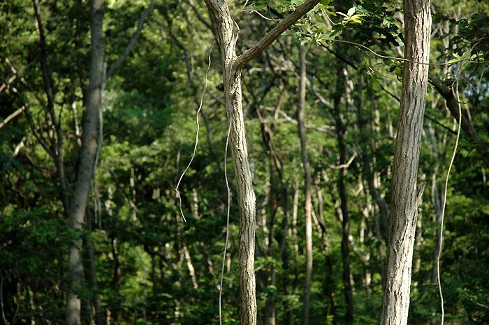 木木木木木